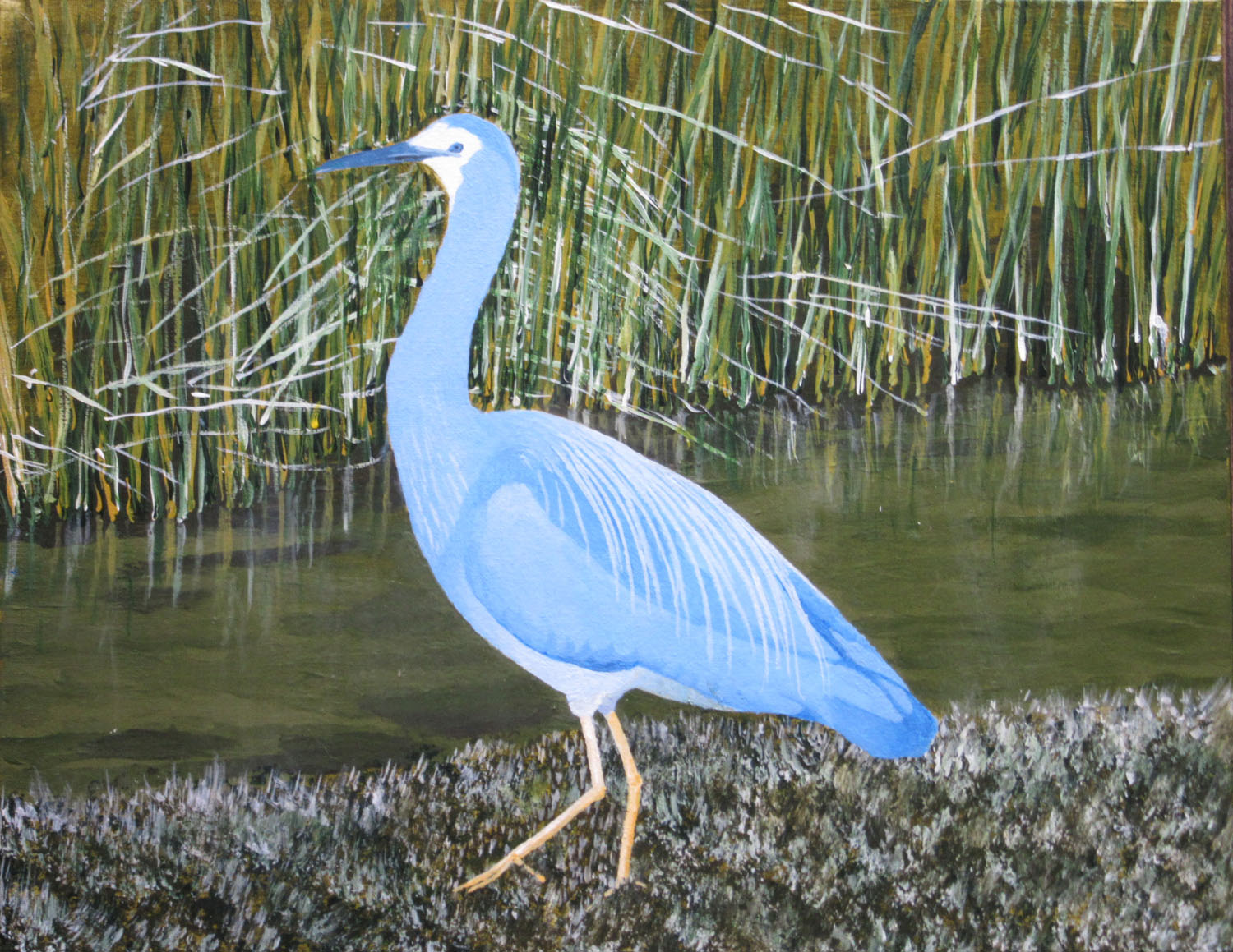 Marsh bird, heron, nz bird, bernard carroll